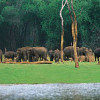 Detailed Tour Guide to Thekkady