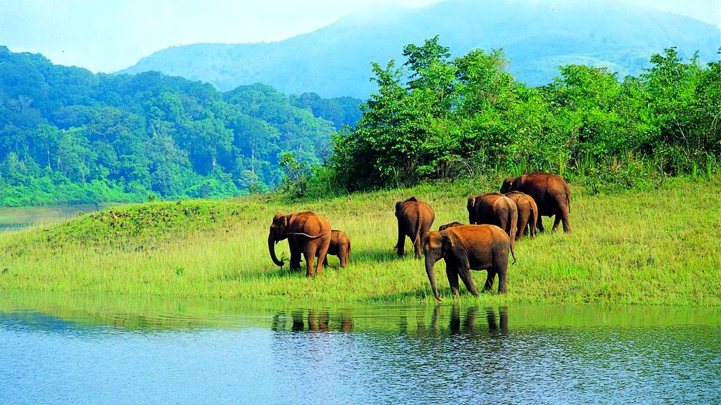 sambhar lake wildlife sanctuary